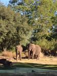 Animal Kingdom-Elephants