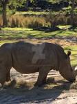 Animal Kingdom-Rhino