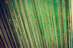 Texture_1