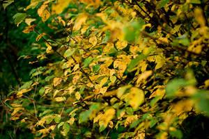Autumn Leafs stock by EK-StockPhotos