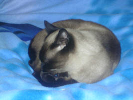 cat 2 by EK-StockPhotos