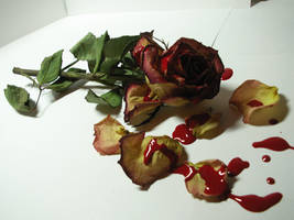 bloody rose stock 4