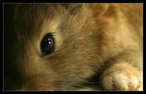 Rabbit by medveh