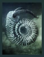 Fossil by fensterer