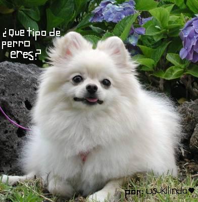 Test: Que raza de perro eres? by usukilinda