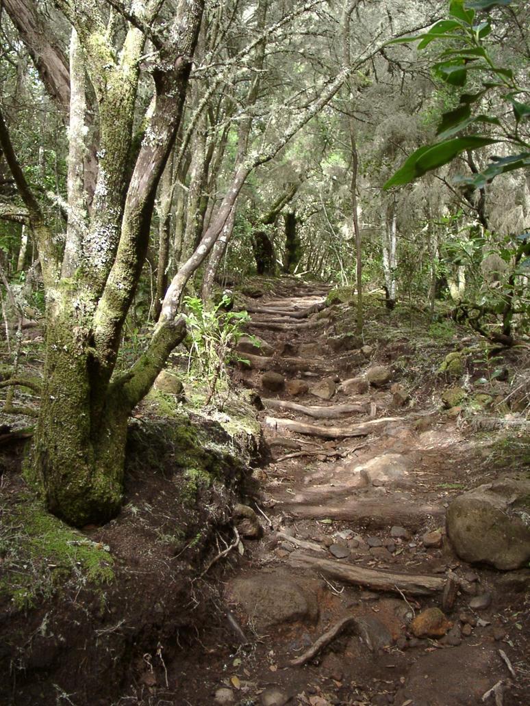 Laurisilva path 8 by RavaT