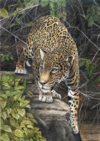 Yaguarete, Jaguar by salinasj