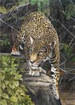 Yaguarete, Jaguar