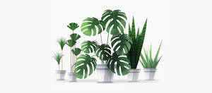 Vector houseplants