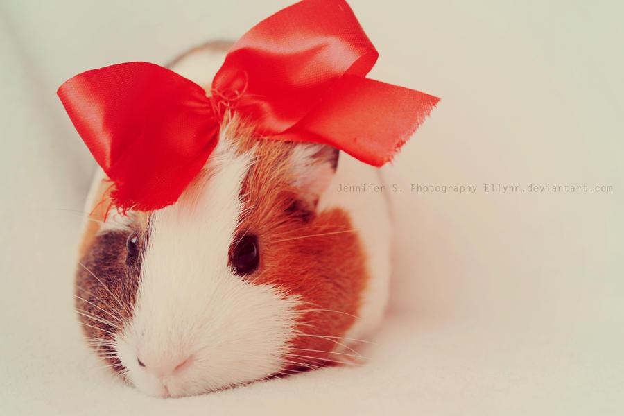 الهامستر Hamster _45_she_s_a_lady_by_