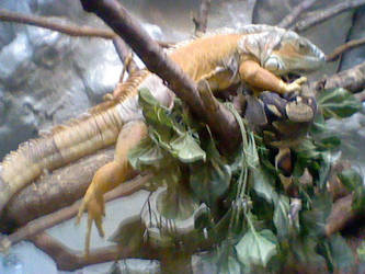 Tree Lizard by Nindendude