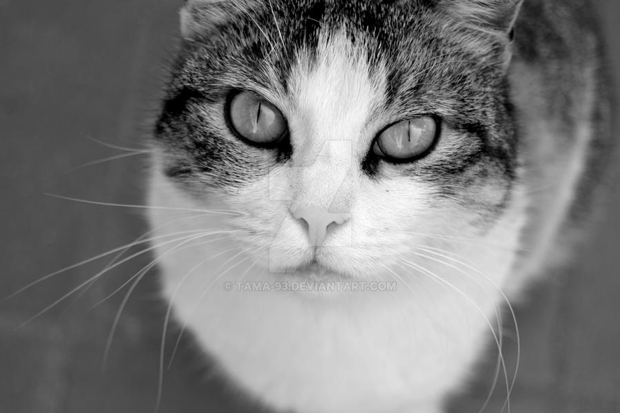 My cat Cochi by tAma-93