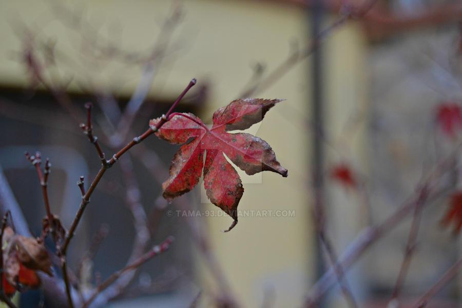Red Leaf by tAma-93