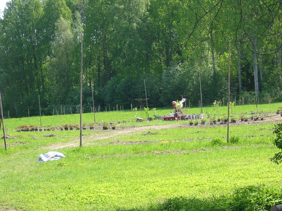 The Herbal garden is  growing by Kattvinge