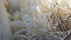 Frozen 210207 5