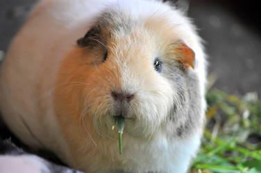 Nala eats grass