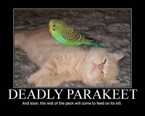 Deadly Parakeet