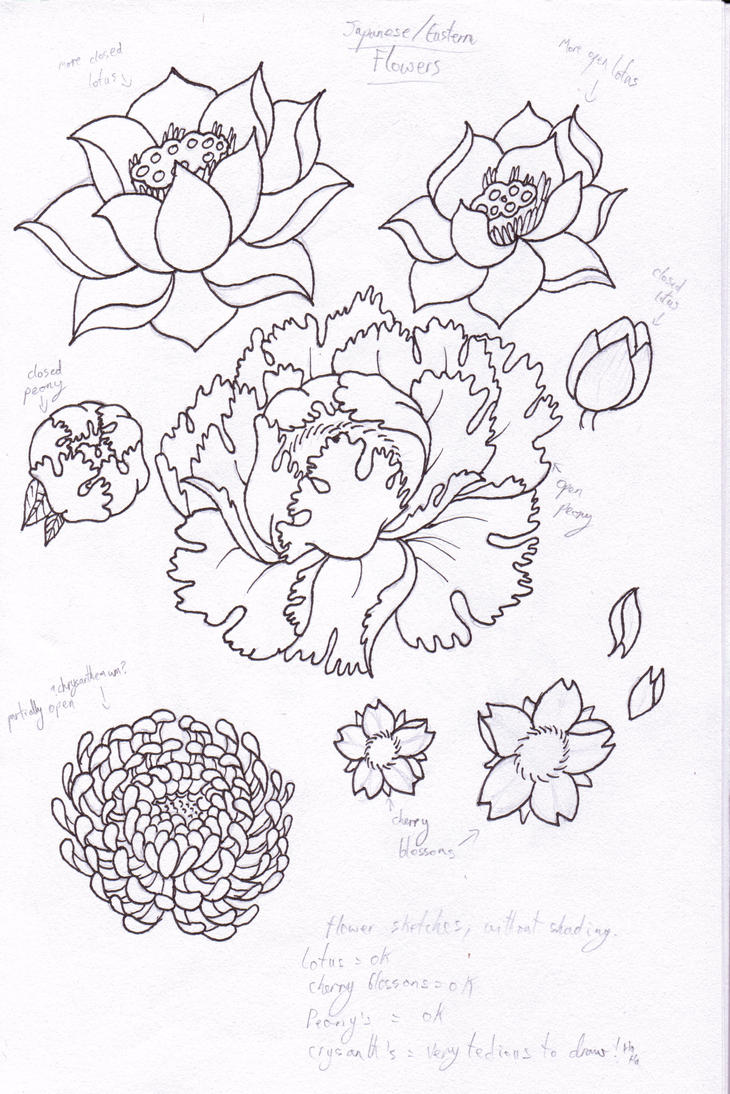 Traditional Flower Line Drawing : Flowers on pinterest chrysanthemum tattoo