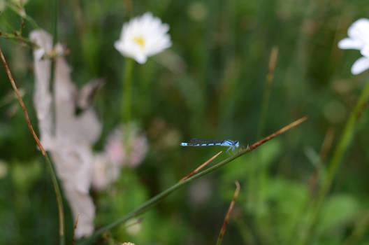Dragonfly munching down