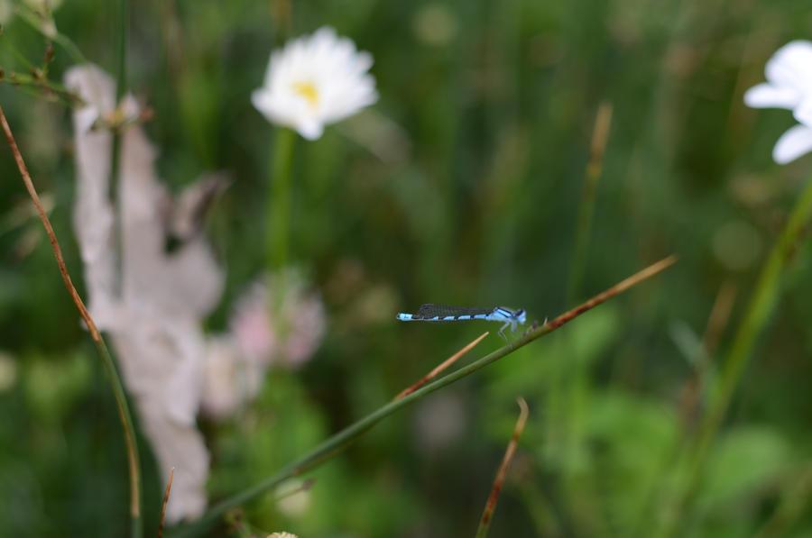 Dragonfly munching down by Anya-Hildebrandt