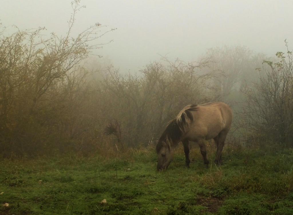 Horsie in the Mist - for Tea by MirachRavaia