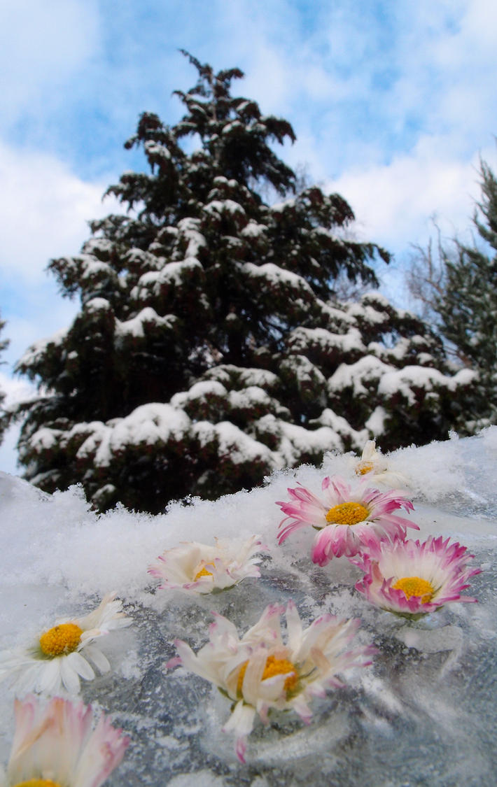 Winter Flowers by MirachRavaia