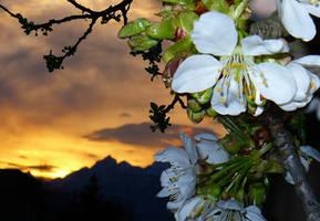 Cherry Sunset by MirachRavaia