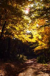 Paths of Light by MirachRavaia