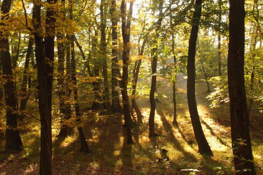 Walking in a sunlit story