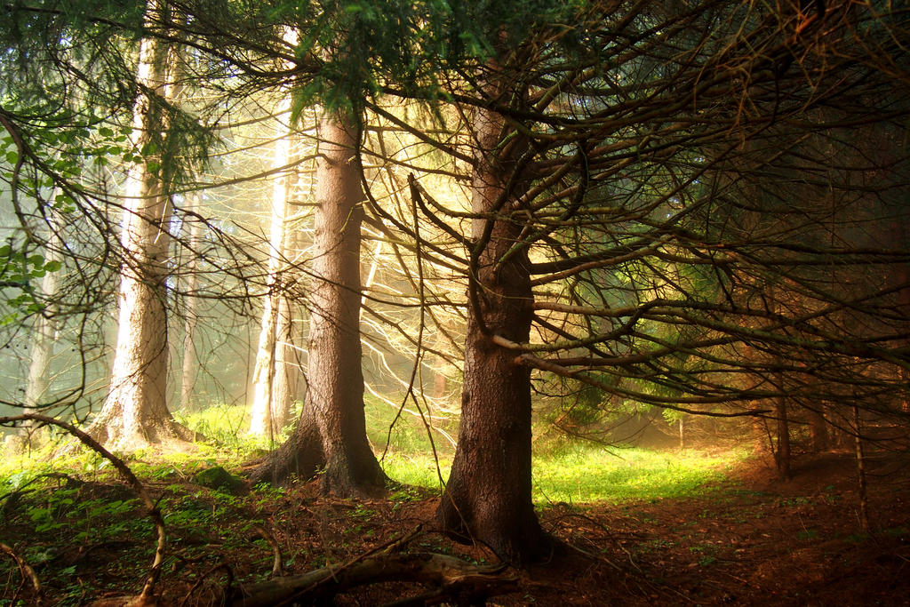 A Bit Of Light In The Forest By MirachRavaia ...