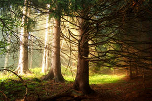 A bit of light in the forest by MirachRavaia