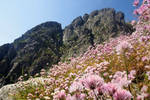 Mountain in pink
