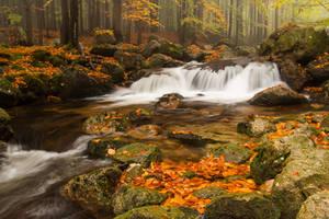 Fall falls by MirachRavaia