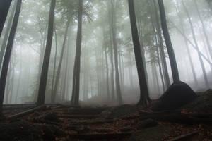 Secret path in the mist by MirachRavaia