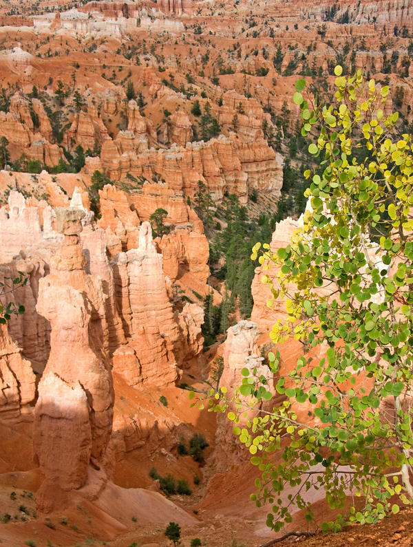 Quaking Aspen and Hoodoos by EvaMcDermott