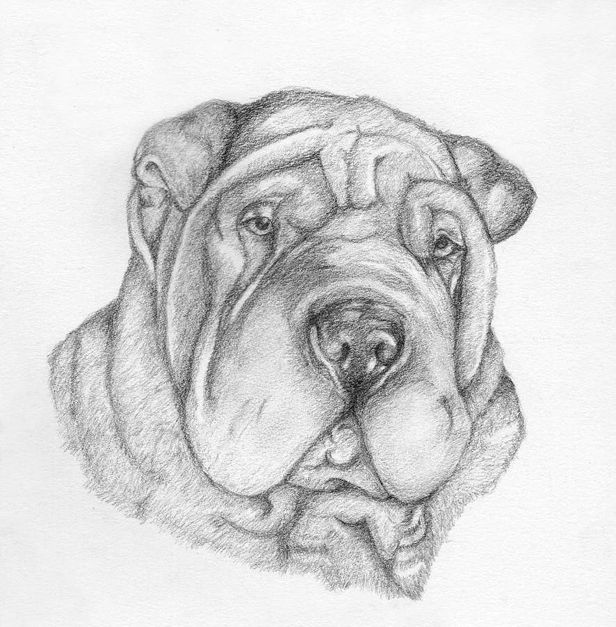 How To Draw Shar Pei Dogs