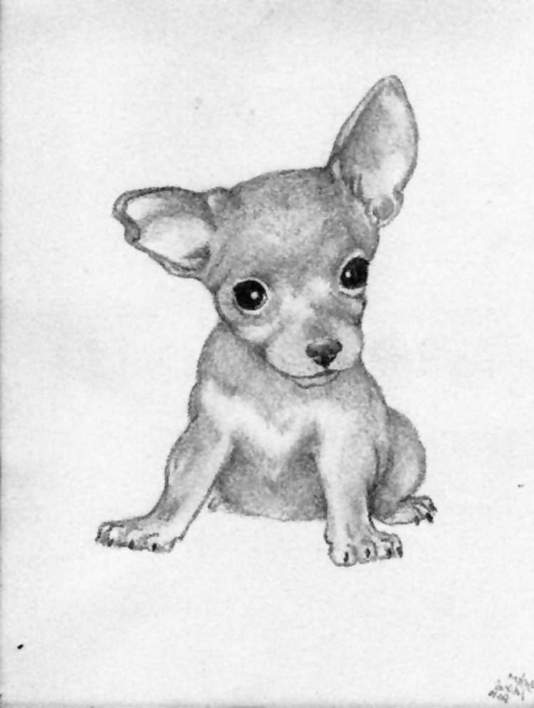 It is a picture of Ambitious Drawing Of Chihuahua