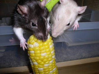 Corn by ELEK-triK