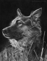 German Shepherd by WickedIllusionArt
