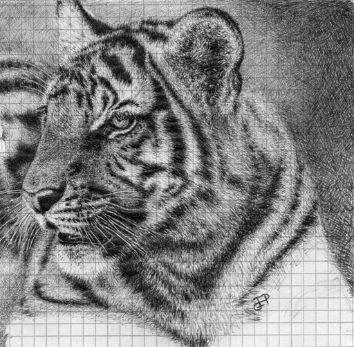 Ballpoint Pen Tiger (Uni doodle) by Wicked-Illusion