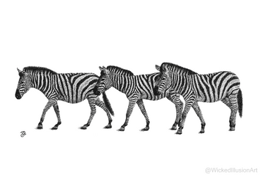 Zebra Line Up