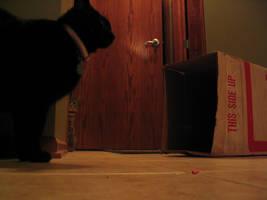 Cats, curious by terminalpreppie1234