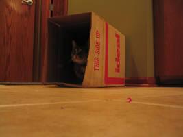 Jules in a box by terminalpreppie1234