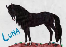 Luna the black mare