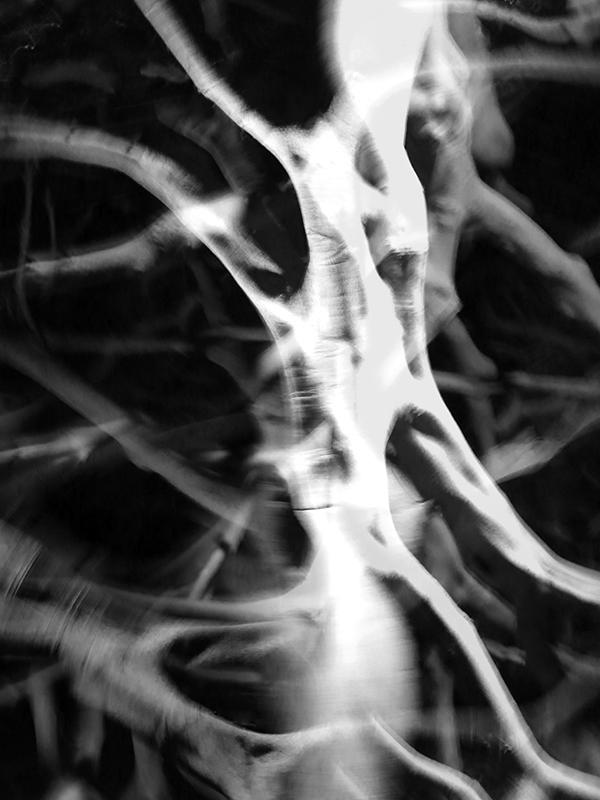 Fluid Trees - III by clockworkApple