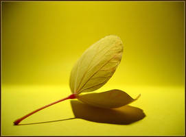 Yellow on Yellow by clockworkApple