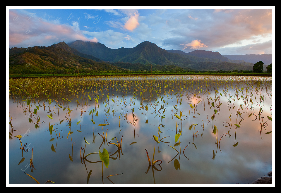 Taro Sky by aFeinPhoto-com