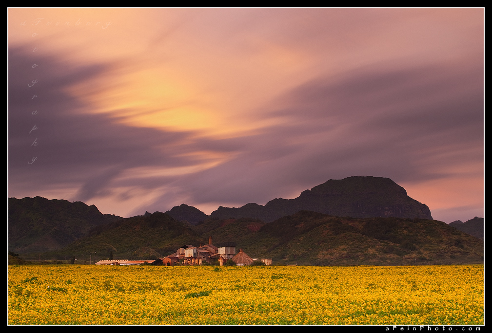 Fields Of Gold by aFeinPhoto-com