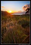 Hanalei Bay Dreams