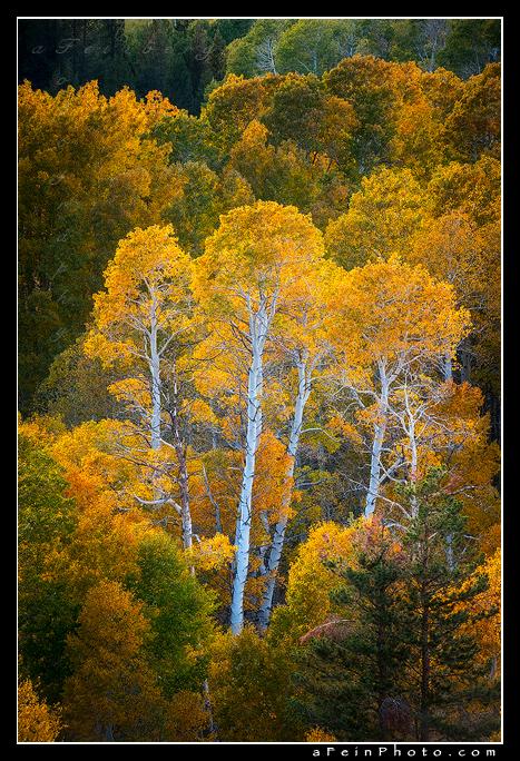 Eastern Sierra II by aFeinPhoto-com